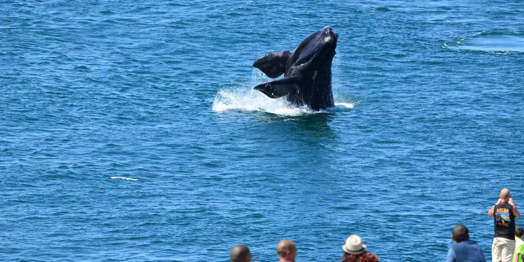 The Lookout Terrace is arguably the best spot in Hermanus to enjoy whale watching